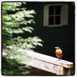 Little Instagrammed bird